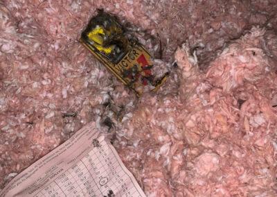 Mice trails in attic